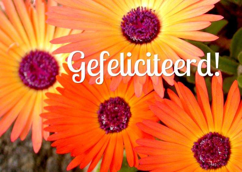 Verjaardagskaarten - Verjaardagskaart Oranje Bloemen