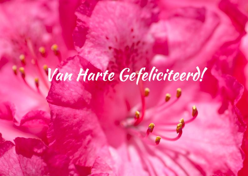 Verjaardagskaarten - Verjaardagskaart-Rhododendron
