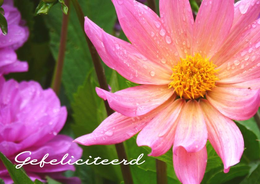 Verjaardagskaarten - Verjaardagskaart roze bloem 2