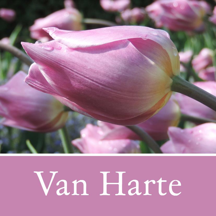 Verjaardagskaarten - Verjaardagskaart roze tulp - SK