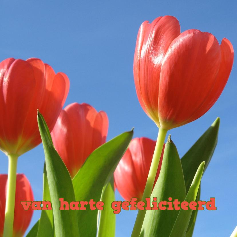 Verjaardagskaarten - verjaardagskaart tulpen XII -LB