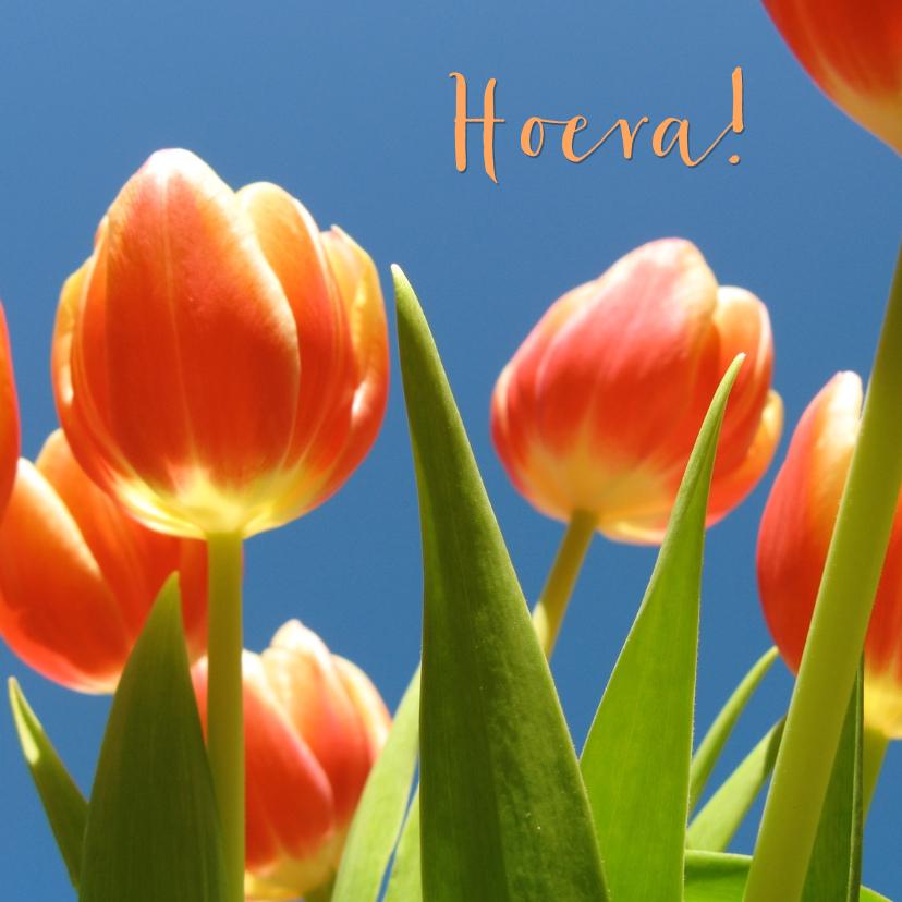 Verjaardagskaarten - verjaardagskaart tulpen XIII -LB