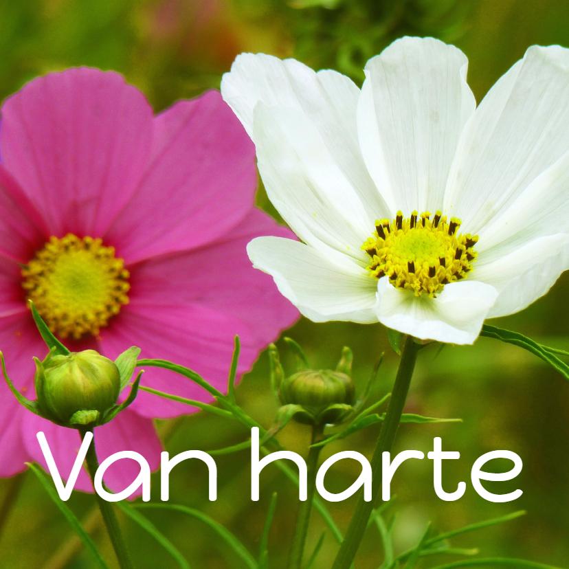Verjaardagskaarten - Verjaardagskaart witte en roze bloem