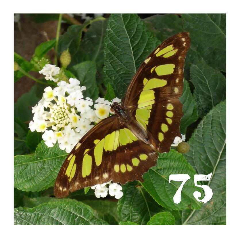 Verjaardagskaarten - Vlinder met bloemetjes