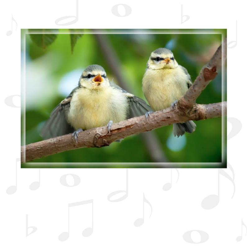 Verjaardagskaarten - Zingende pimpelmeesjes