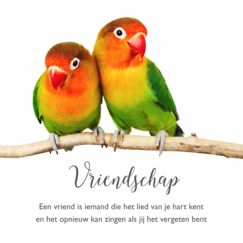 Vriendschap kaarten - Vriendschap kaart 2 lieve vogeltjes