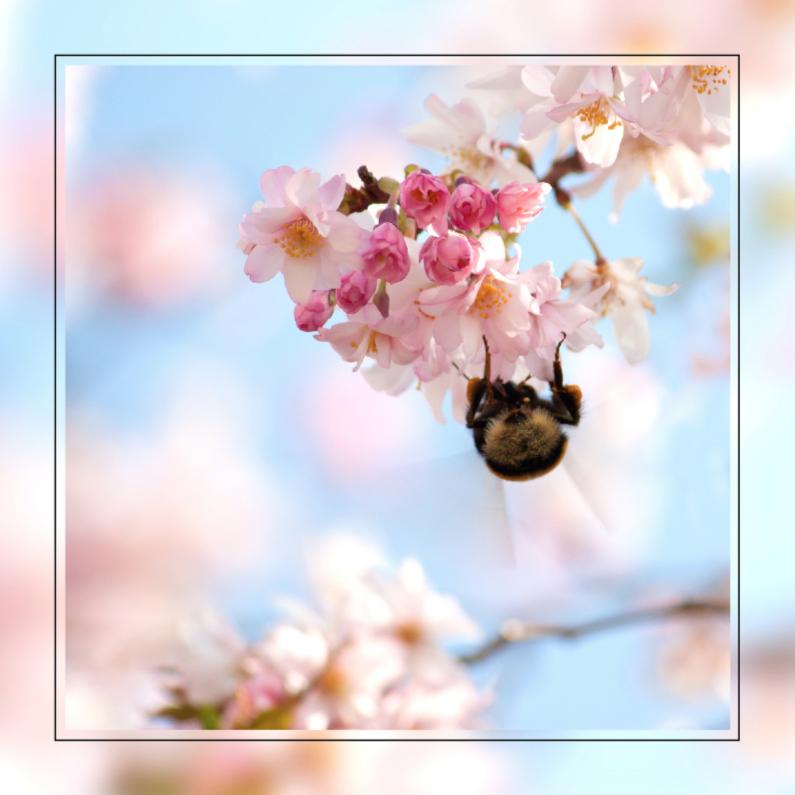 Wenskaarten divers - Prunus-bloesem