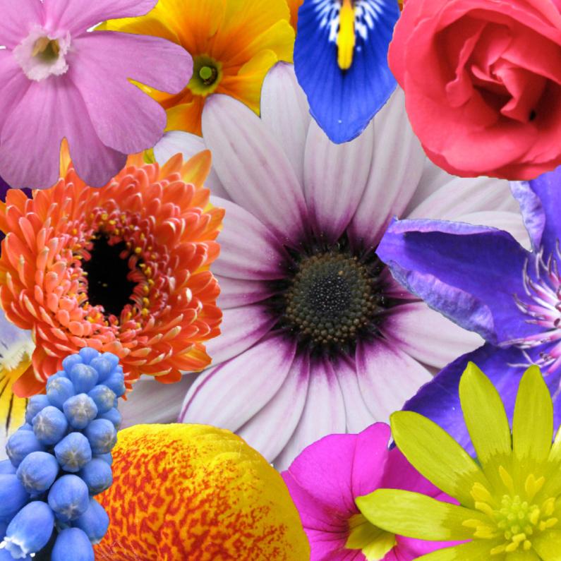 Zomaar kaarten - Bloemen potpourri