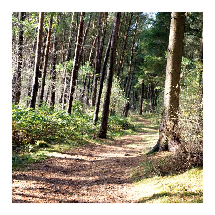 Zomaar kaarten - Herfst bos