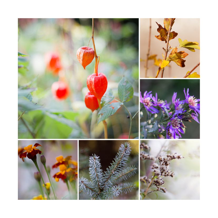 Zomaar kaarten - herfst flora