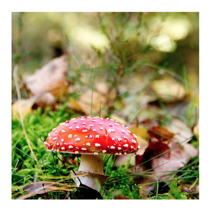 Zomaar kaarten - Herfst paddestoel