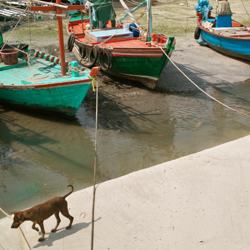 Zomaar kaarten - Hond met bootjes