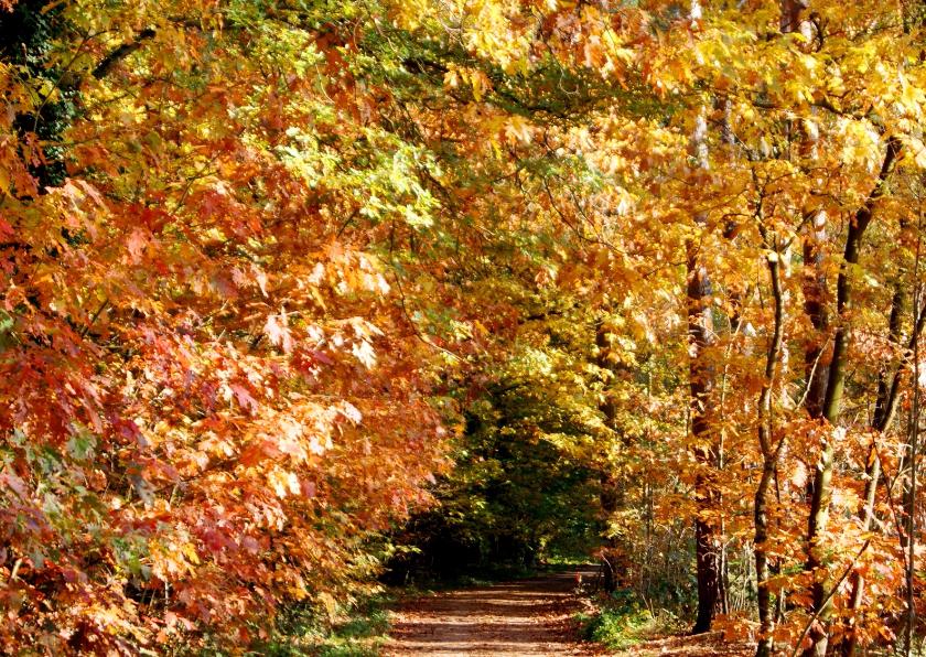 Zomaar kaarten - Kleurig herfst