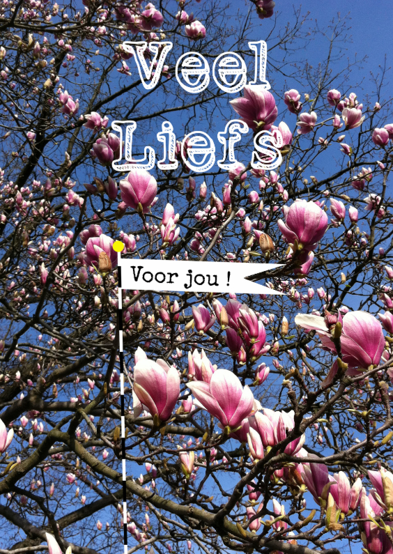 Zomaar kaarten - Magnolia, voor jou