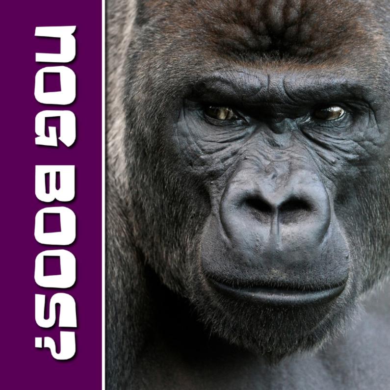 Zomaar kaarten - NOG BOOS - gorilla - OT