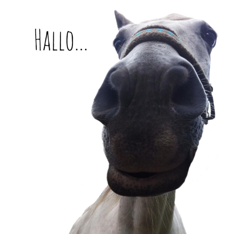 Zomaar kaarten - Paard van dichtbij-isf
