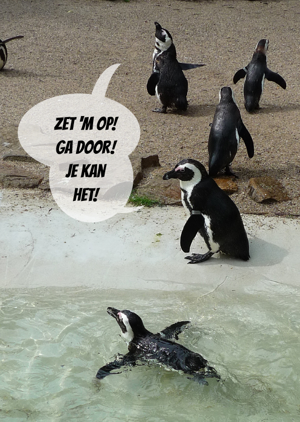 Coachingskaarten - Pinguin Coaches