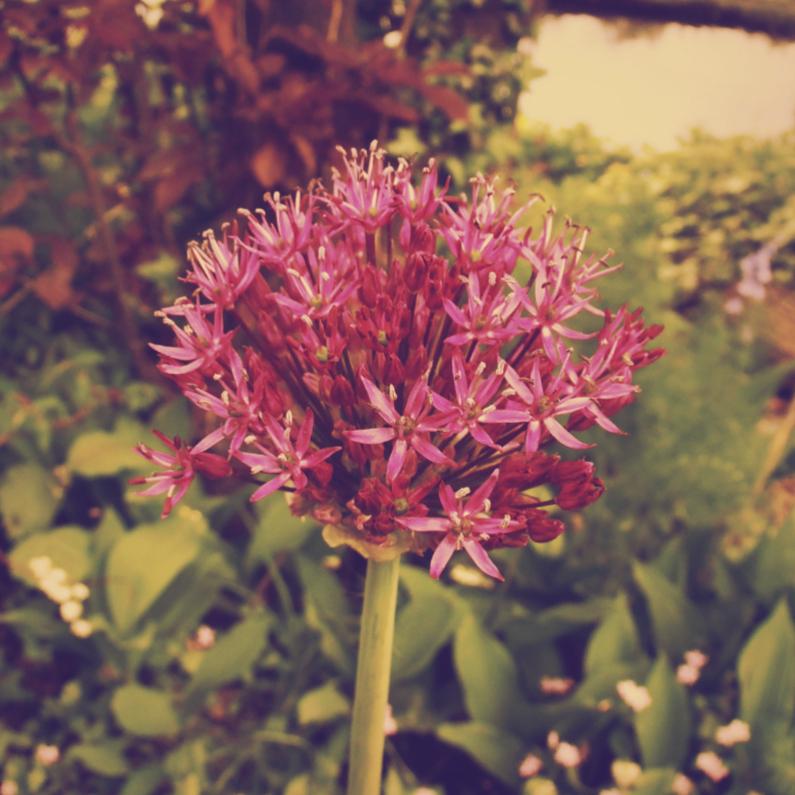 Zomaar kaarten - Roze bloem