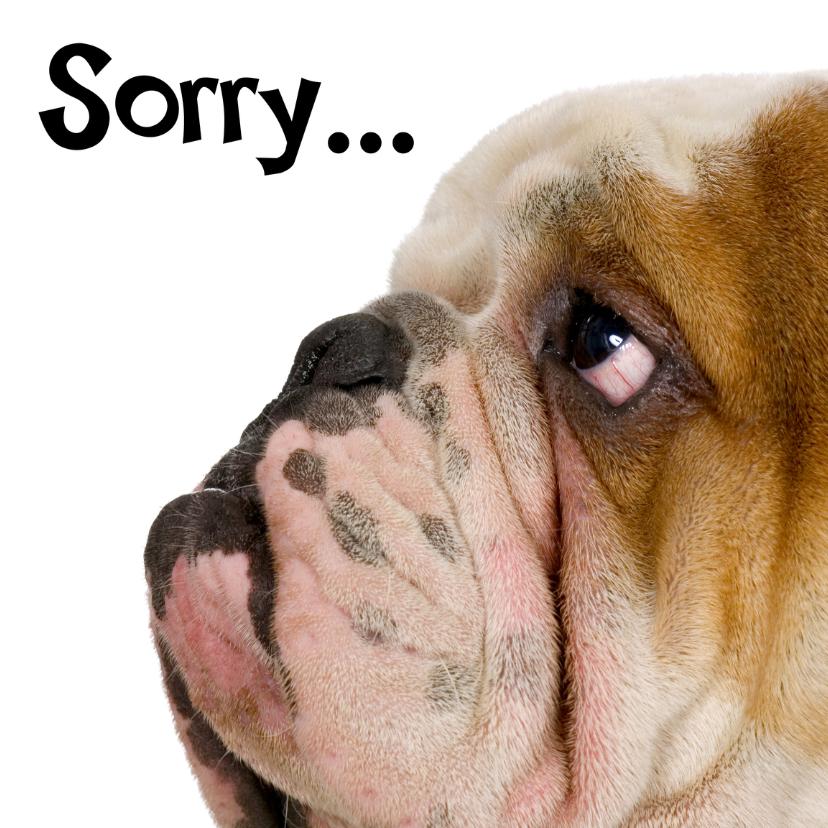 Zomaar kaarten - Sorry kaart met droevig hondje