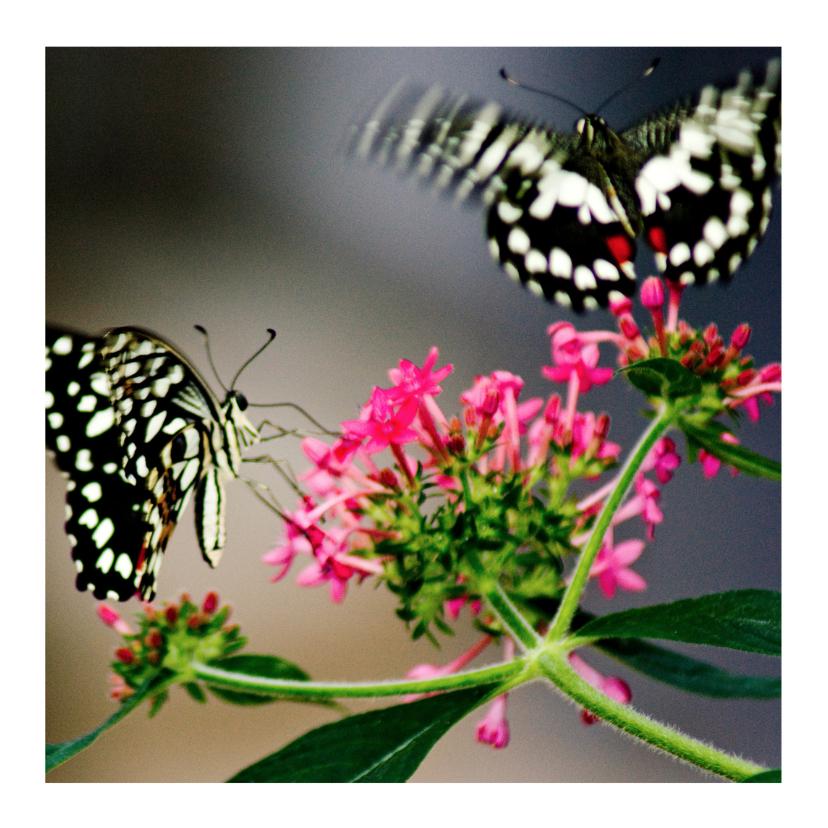 Zomaar kaarten - Vlinders op tak