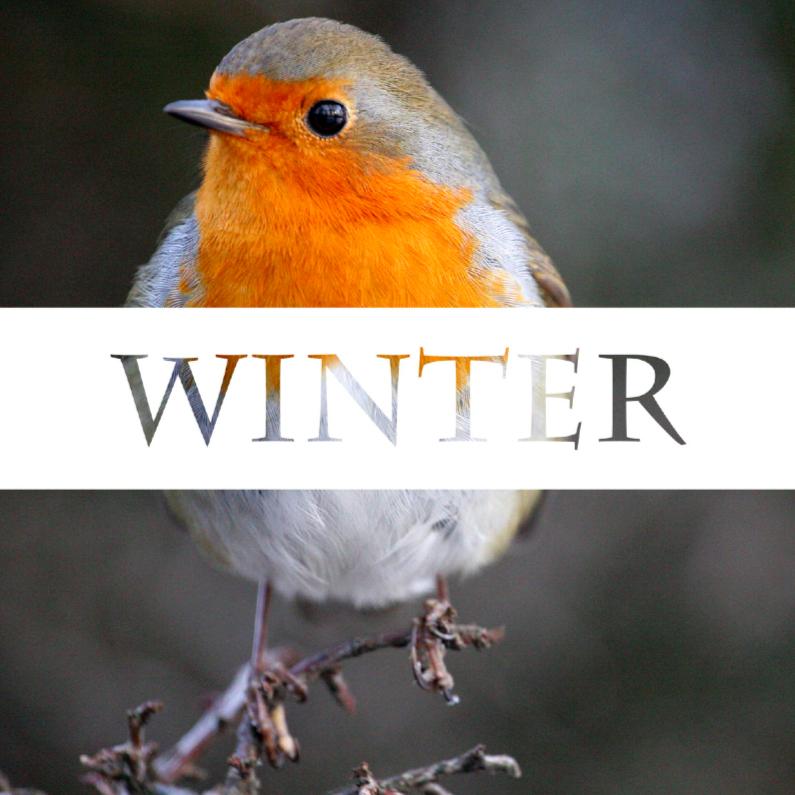 Zomaar kaarten - Winter roodbrostje