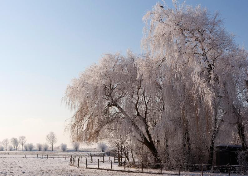 Zomaar kaarten - Winter Wonderland
