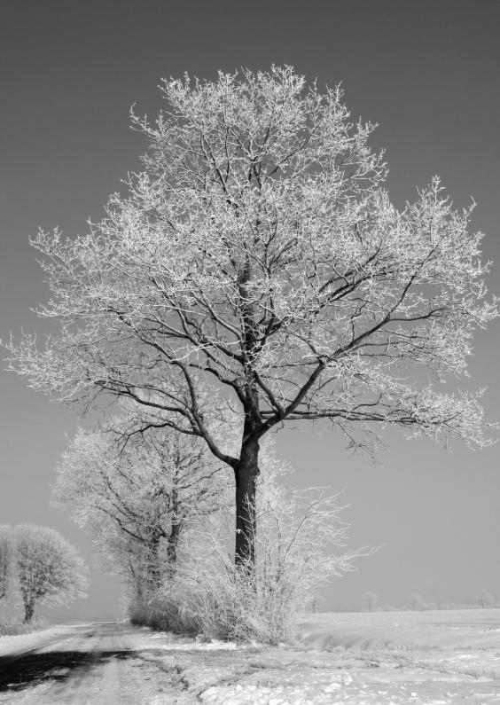 Zomaar kaarten - winterboom landschap