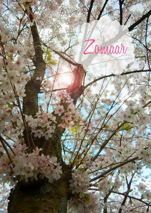 Zomaar kaarten - Zomaar bloesemboom lente