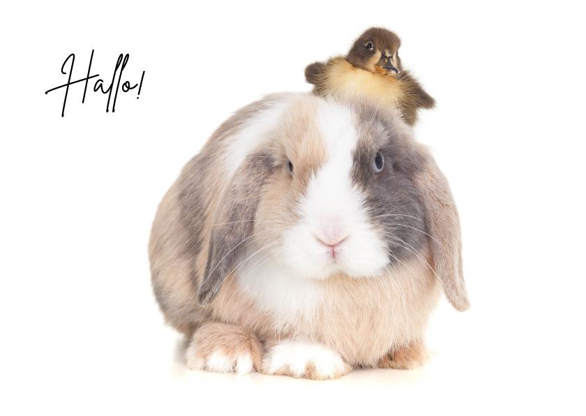 Zomaar kaarten - Zomaar kaart - Hallo! Schattig konijn met kuikentje op hoofd