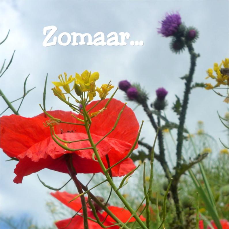Zomaar kaarten - Zomaar Veldbloemen