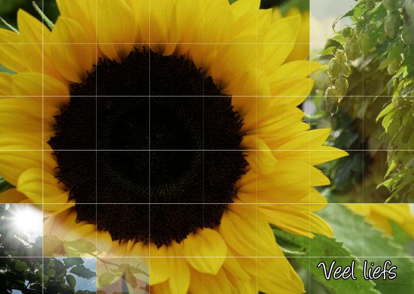zonnebloem en groen in de zon  1
